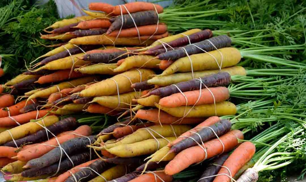 carrots-picture