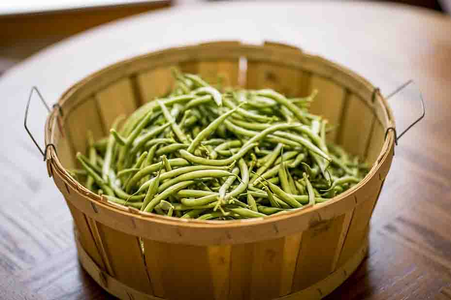 growing-green-beans-guide