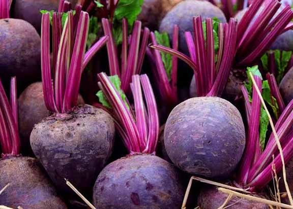 Beets-Vegetables-That-Can-Grow-in-Shade