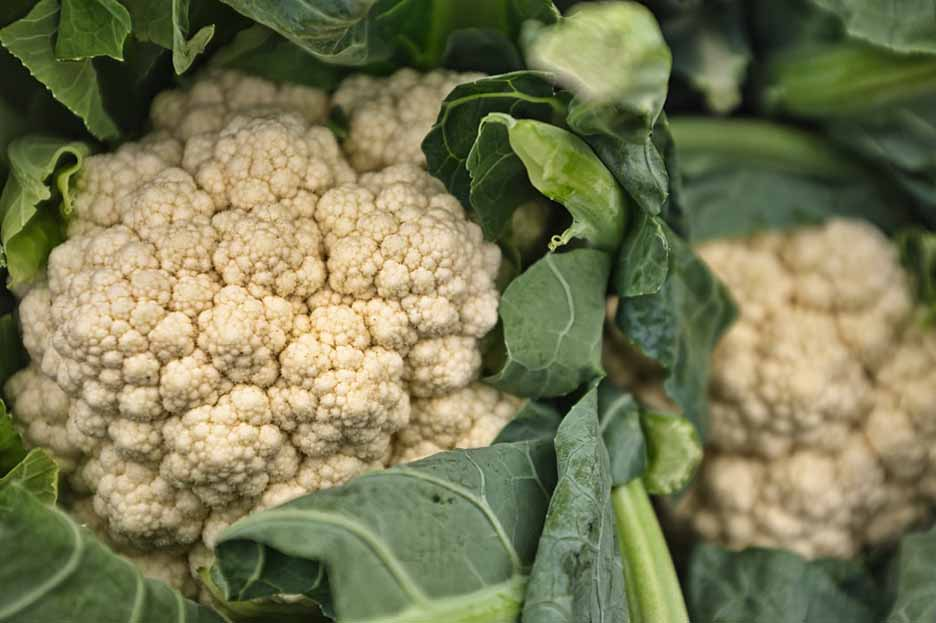 cauliflower-vegetable-that-can-grow-in-shade