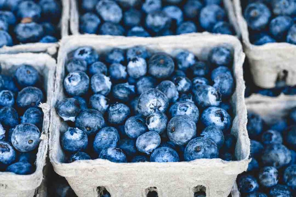 how-to-grow-blueberries-in-containers