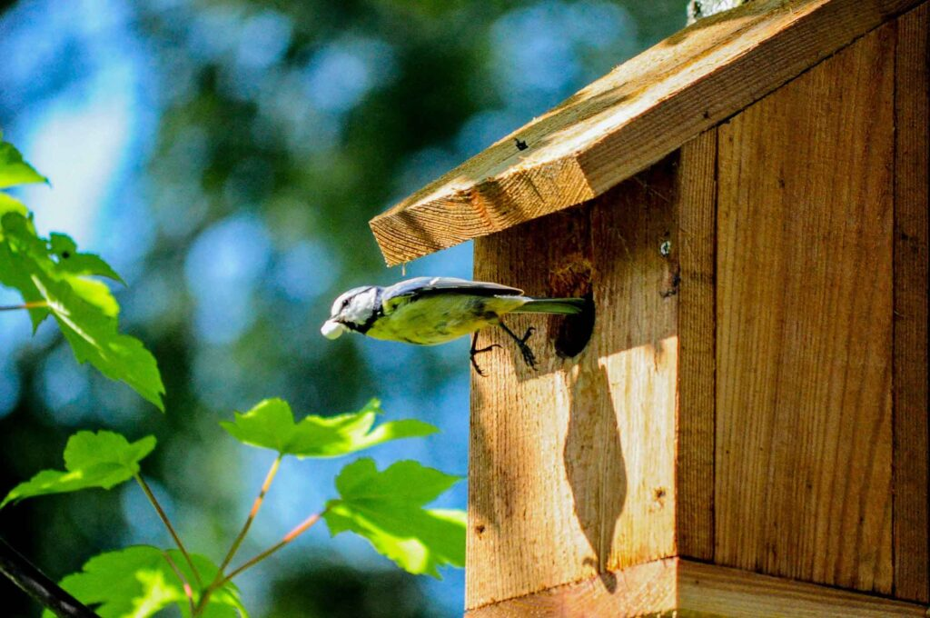 bird-house-how-to-keep-snails-and-slugs-out-of-your-garden