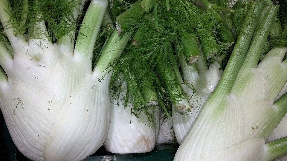 fennel-plants-with-antiviral-properties