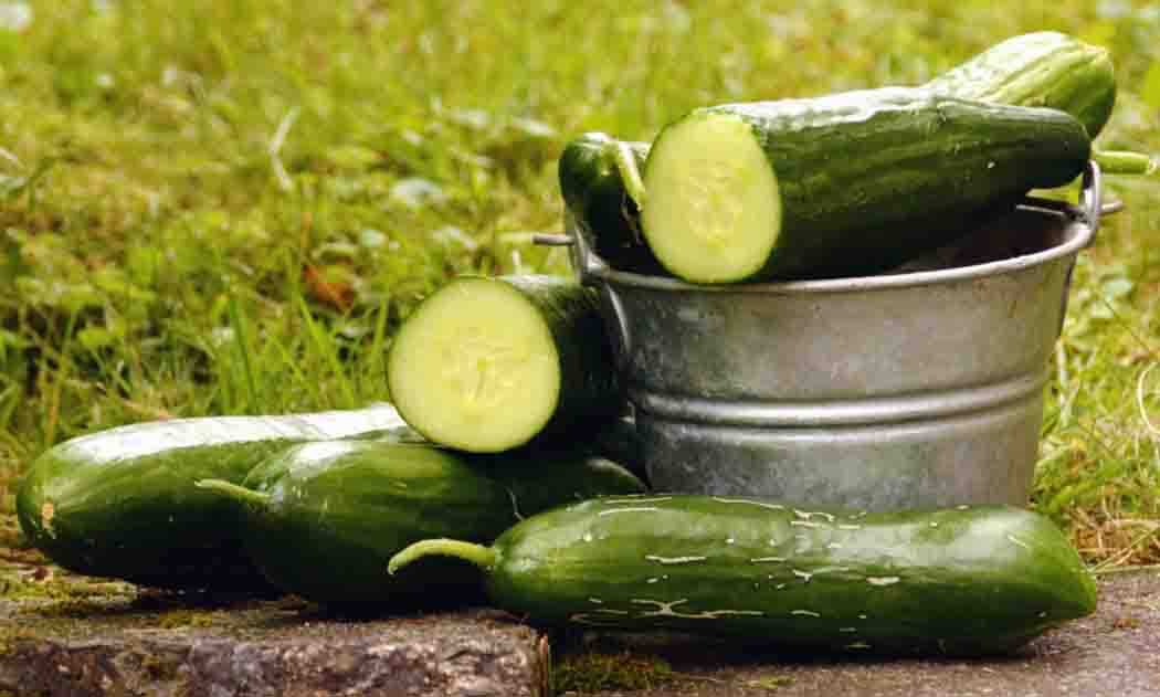how-to-grow-cucumber