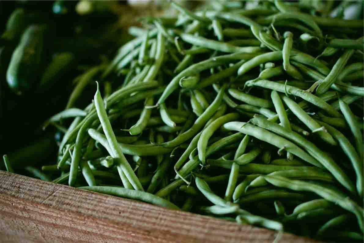 how-to-growgreen-beans-guide