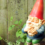 Garden Gnome Collections